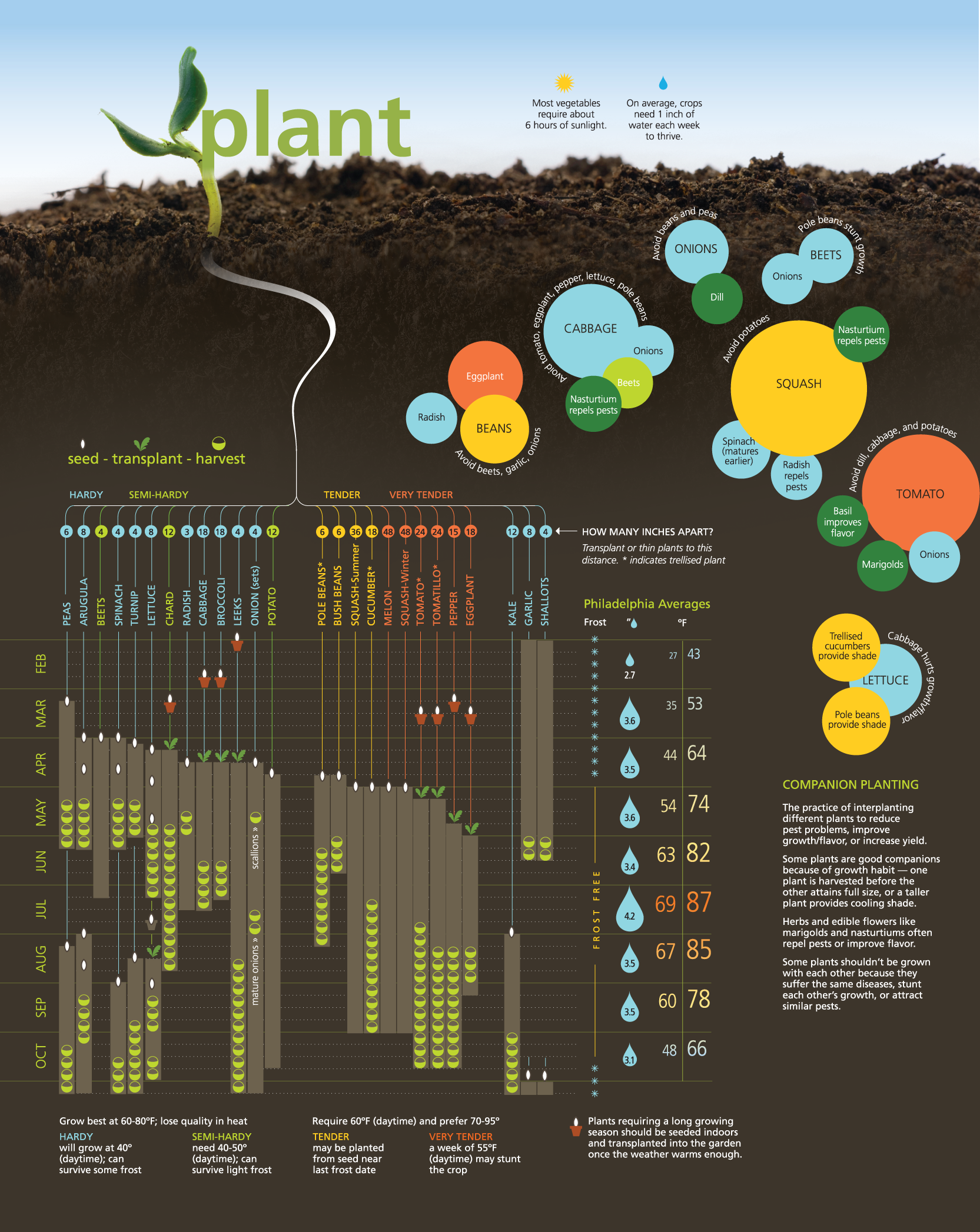 Seriously great infographic with loads of planting tips for your ...