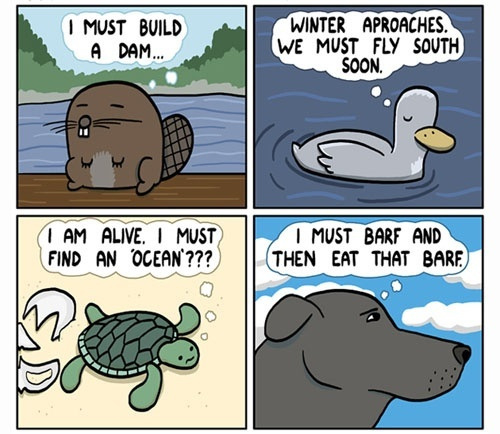 Animals and their natural urges...