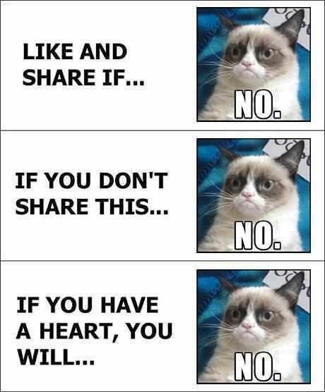 Grumpy cat does not like Facebook spam