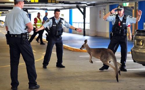 Australian police...