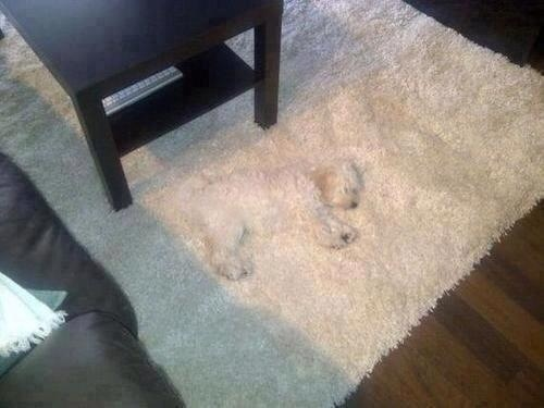 Best camouflage dog ever