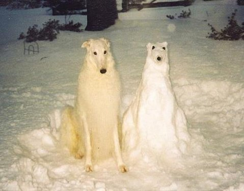 How to clone a snow dog