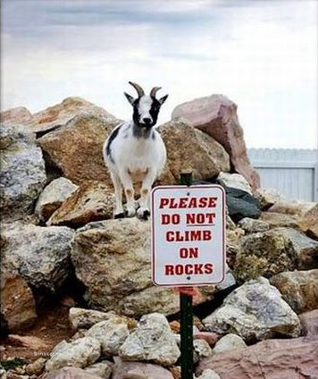Goats- Natures anarchists