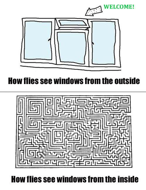 How flies see windows