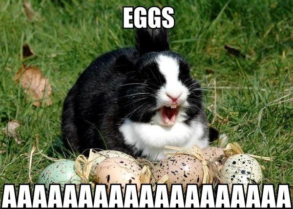 Funny Happy Easter Pictures 6p9lwrc.jpg