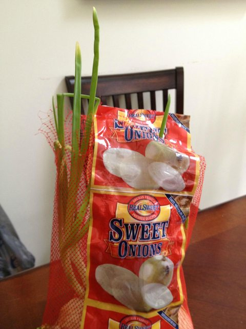 I can't keep a real plant alive to save my life; but, every time I buy a bag of onions...