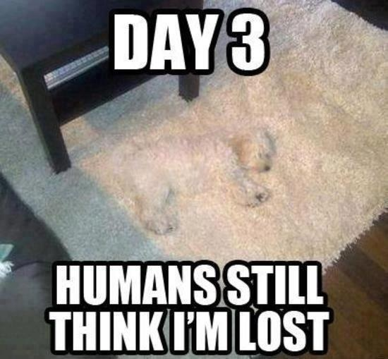 Why you shouldn't get a dog matching your carpet