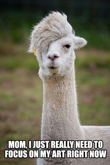 The misunderstood emo alpaca
