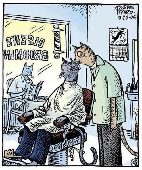 When cats go to the barber...
