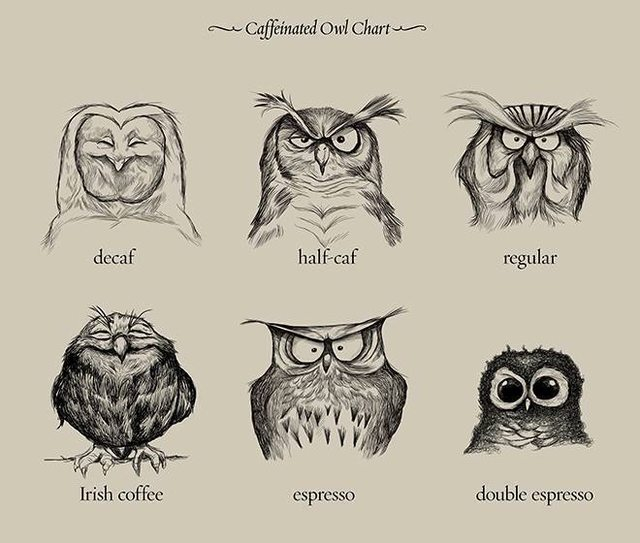 Even I as a non-coffee drinker find this funny - The world of coffee explained by owls