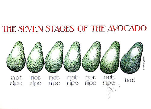 The 7 stages of the avocado