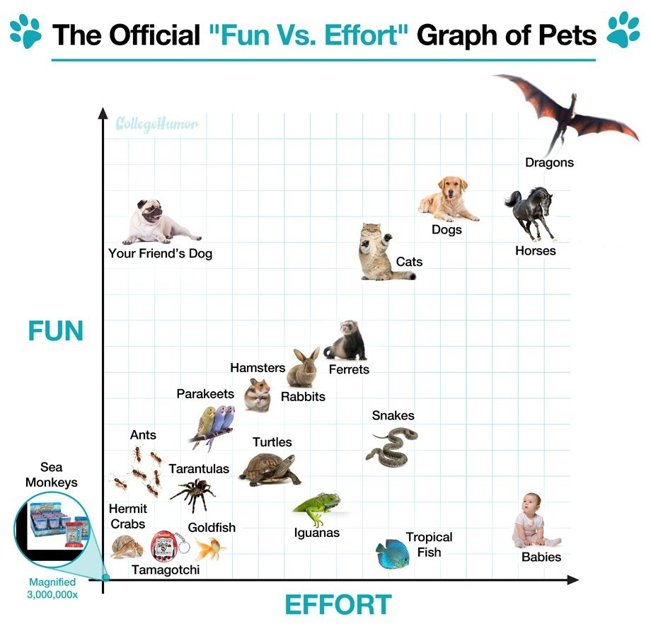 "The Official ""Fun Vs. Effort"" Graph of Pets"