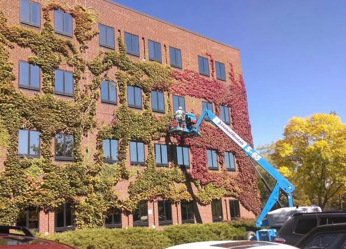We had to bring the guys in to change the ivy from summer to fall.