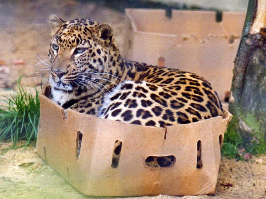 It works on big cats too