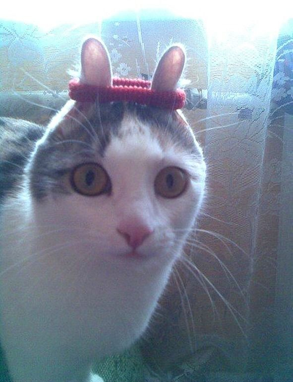 When you give a cat a hair tie