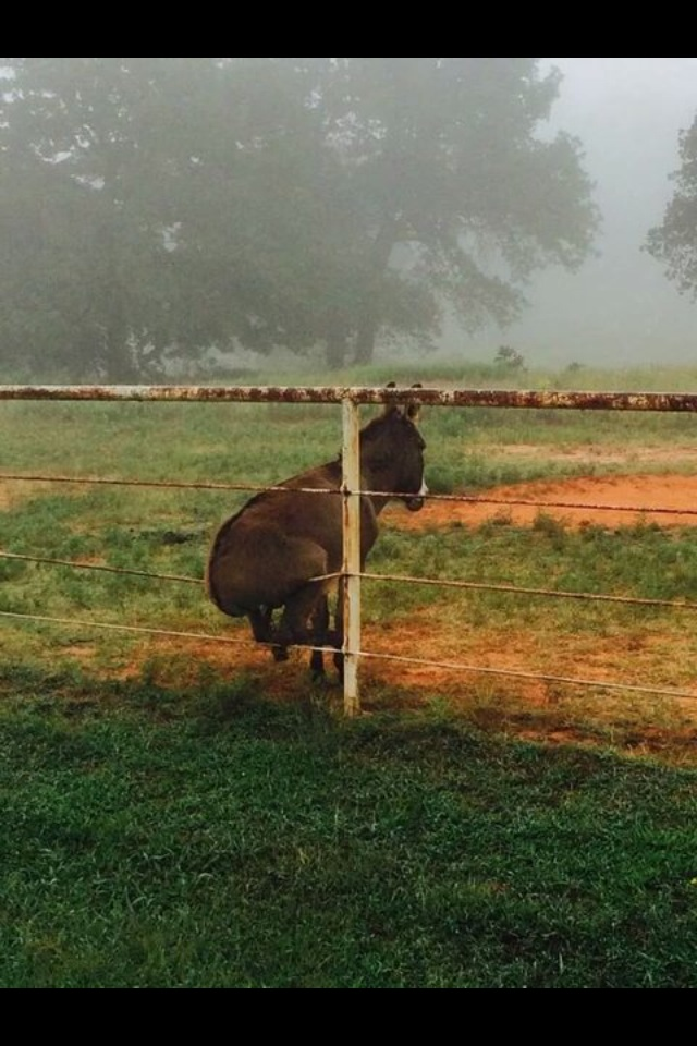 Get your ass off my fence!
