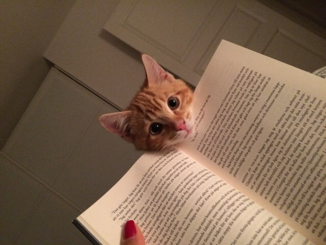 It's been increasingly difficult to read lately